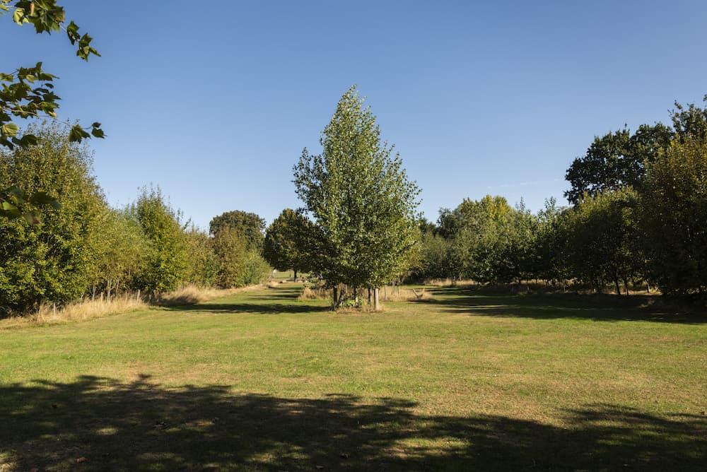 Street Tree Woodland Planting